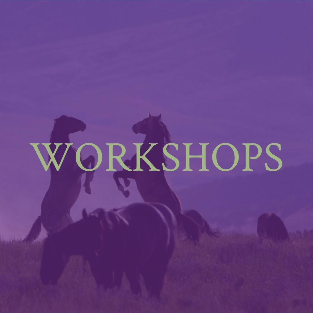 North Carolina Equine Therapy - Willow Equine workshops