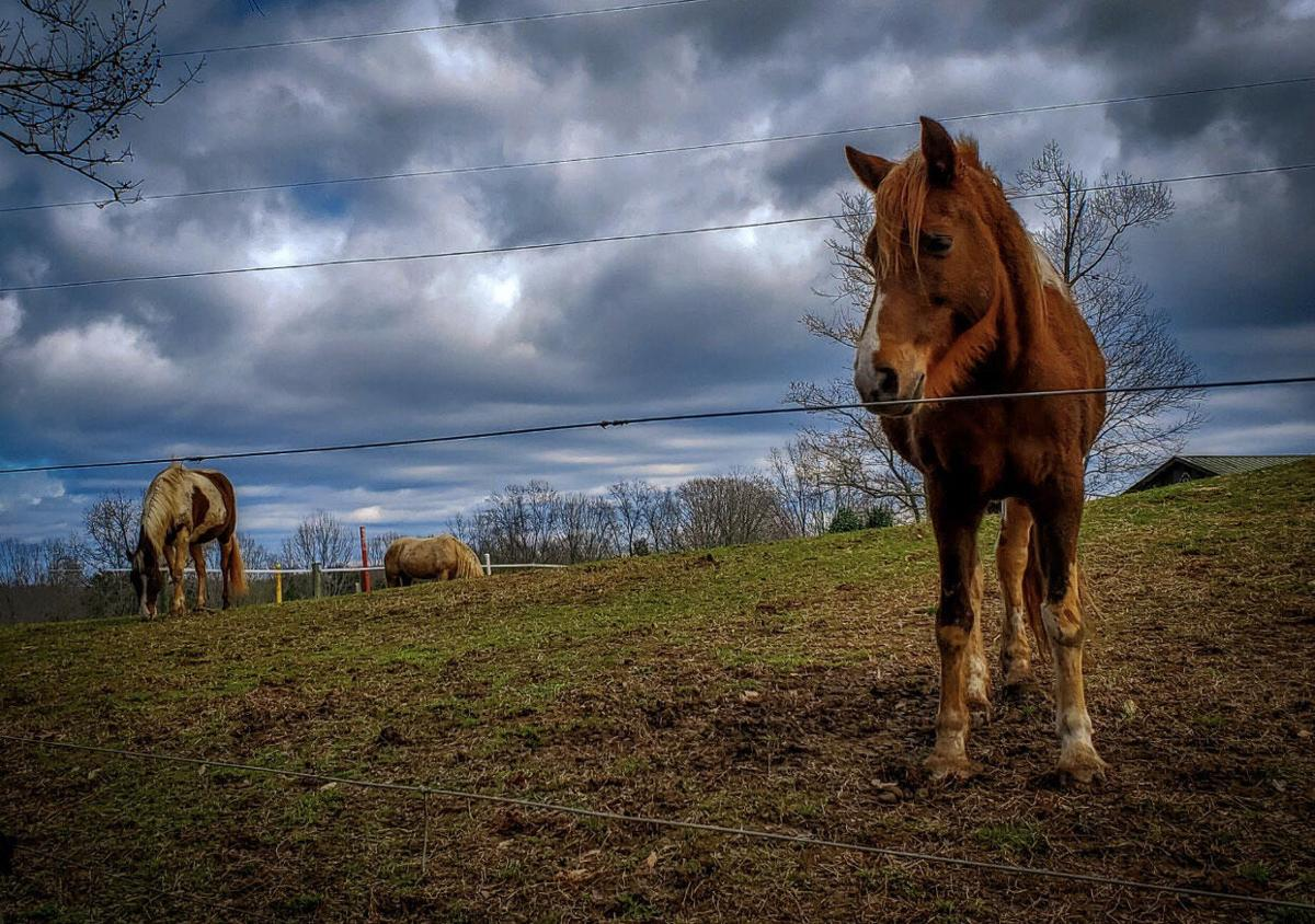 Horse in a field. North Carolina Equine Therapy